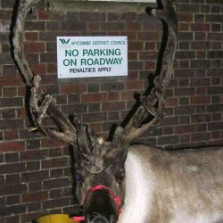 Wycombe District Council Christmas lights launch. Parked Reindeer